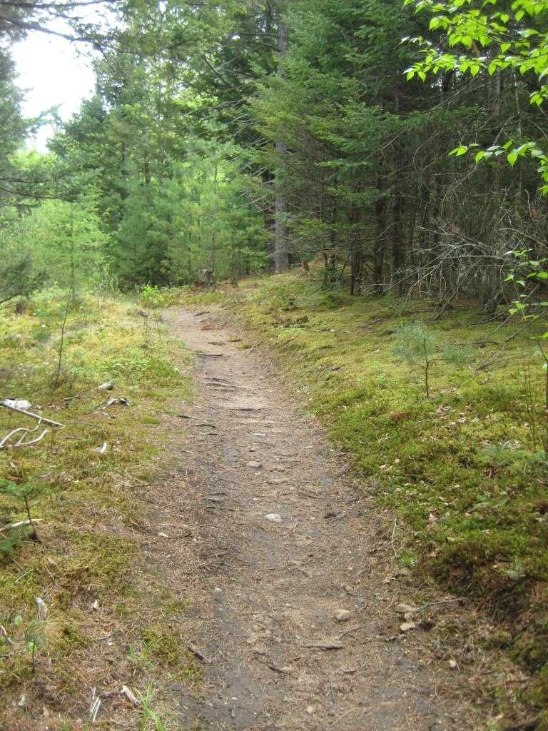 Mt Kinsman Trail