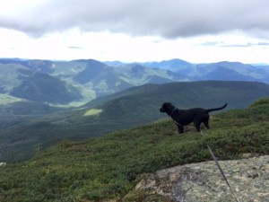 Dog on Franconia Ridge