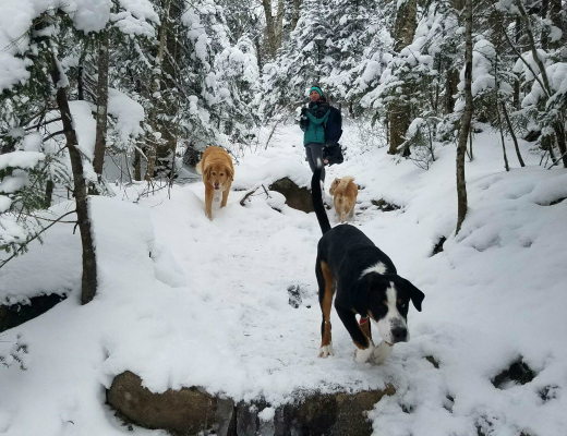 The deep snow did not hinder the dogs, Lila, Vaida, or Belle.