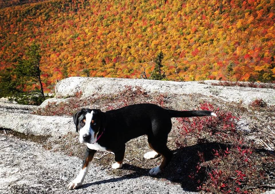 An autumn view from Artist's Bluff with Lila, the Notch Mascot