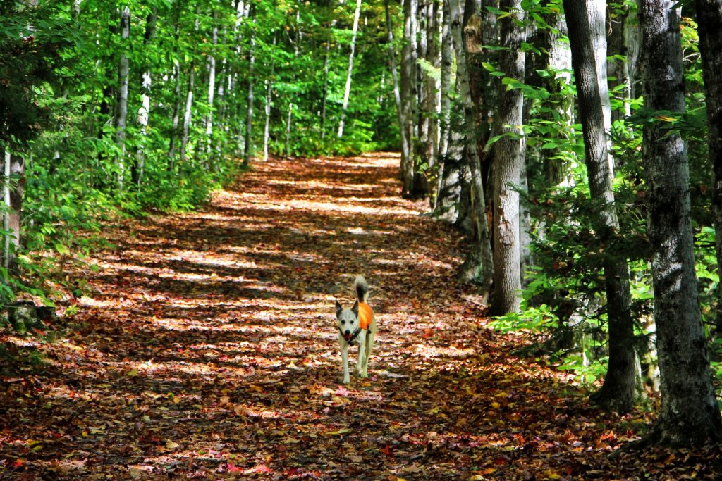 Enjoy a scenic walk in Lincoln Woods. Featuring Star (aka No Shame).