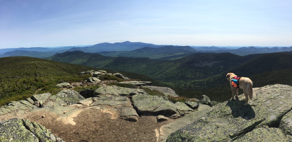 Vaida gazing into the Pemigewasset Wilderness from the summit of South Twin.