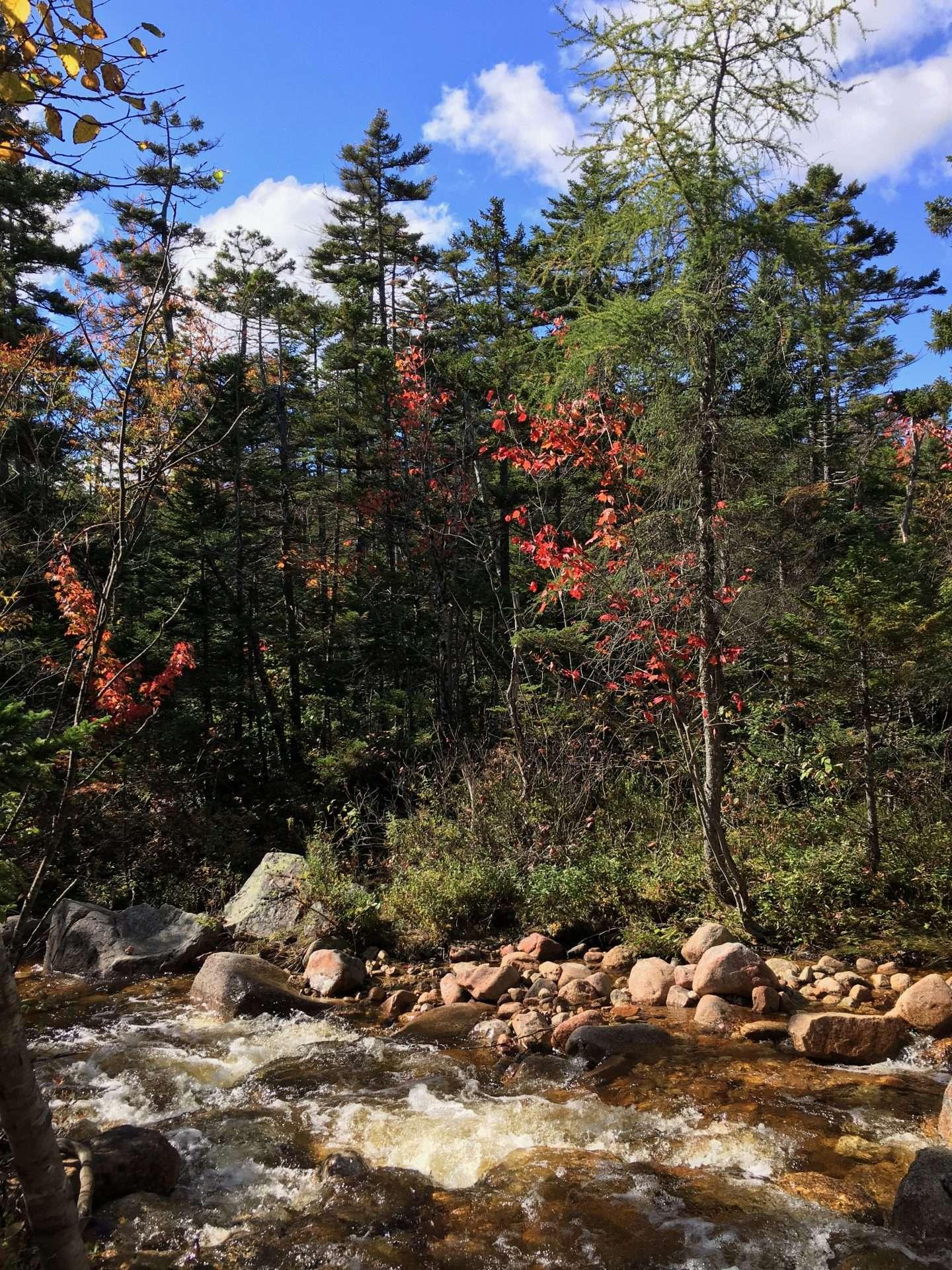 cedar-brook-trail-crossing-1.jpg